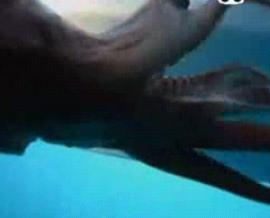 巨大イカを追え1